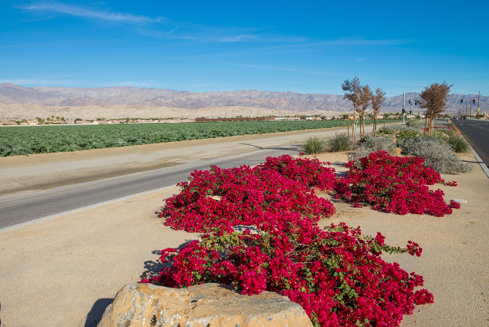 Plain road view located in Indio County California